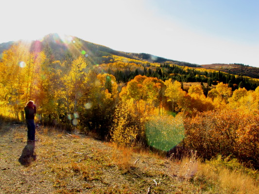 fall foliage in the New Mexico mountains